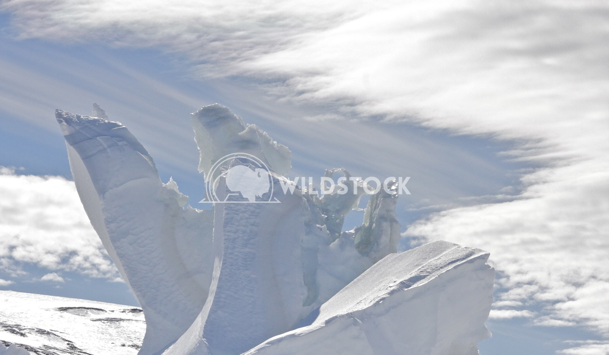 Ice Sculpture Laura Gerwin