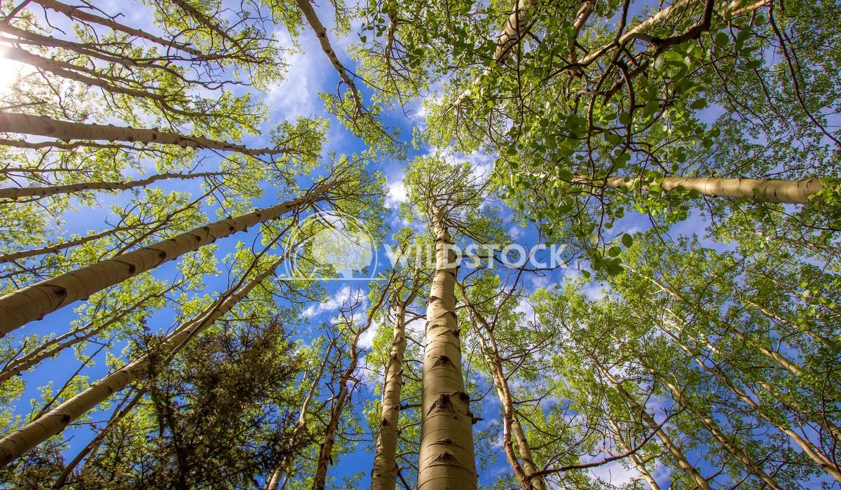 Hug a tree Laura Gerwin