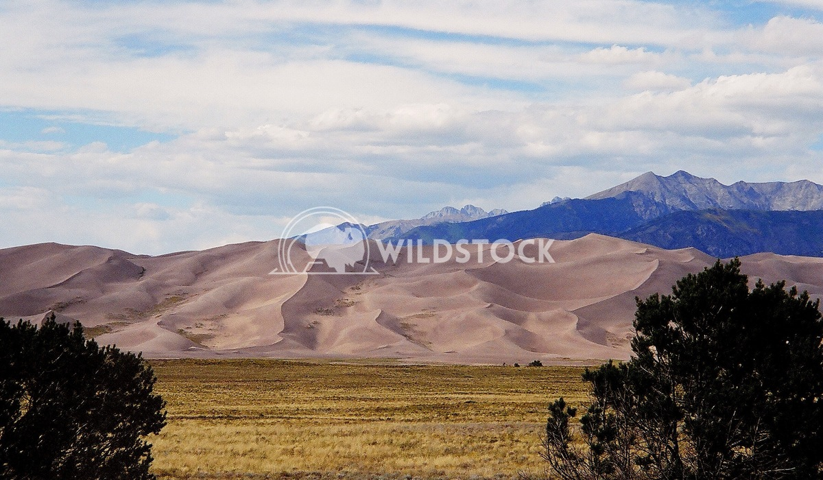 Sand Dunes in Frame Henry McCluster