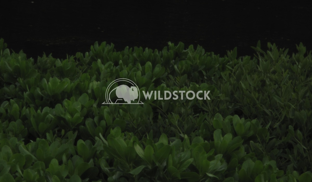 Dark Plants Jennifer McCann