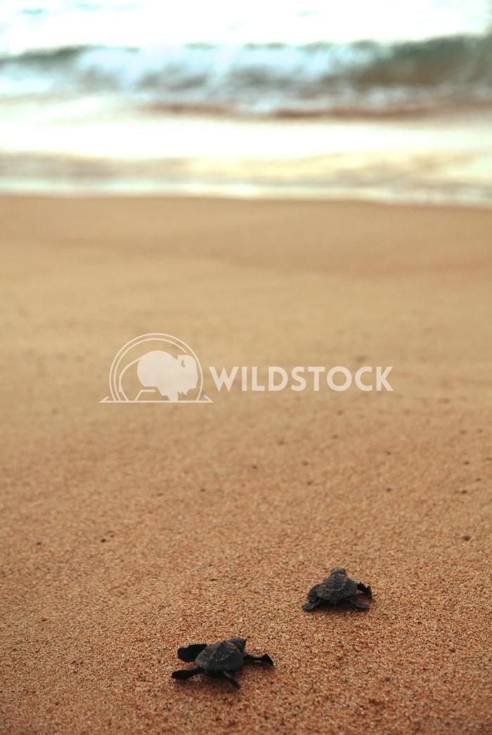 Las Tortugas I - Costa de Careyes, Mexico Devon Chivvis