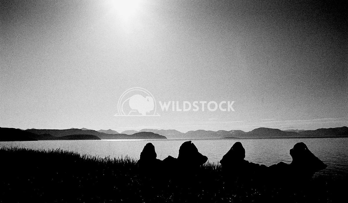 Yttygryn Island, Siberia, Russia - Whale Bone Alley II Devon Chivvis