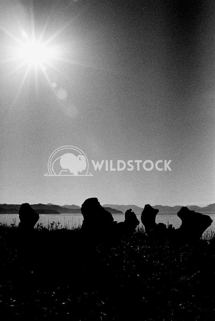 Yttygryn Island, Siberia, Russia - Whale Bone Alley I  Devon Chivvis