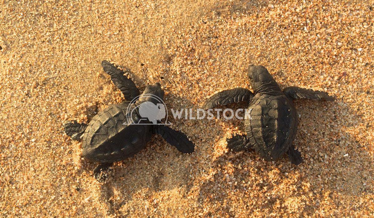 Las Tortugas V - Costa de Careyes, MexicoCosta de Careyes, Mexico Devon Chivvis