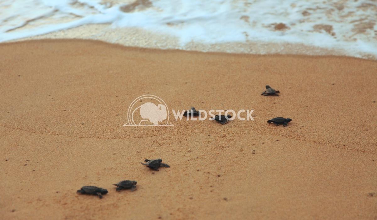 Las Tortugas II - Costa de Careyes, Mexico Devon Chivvis