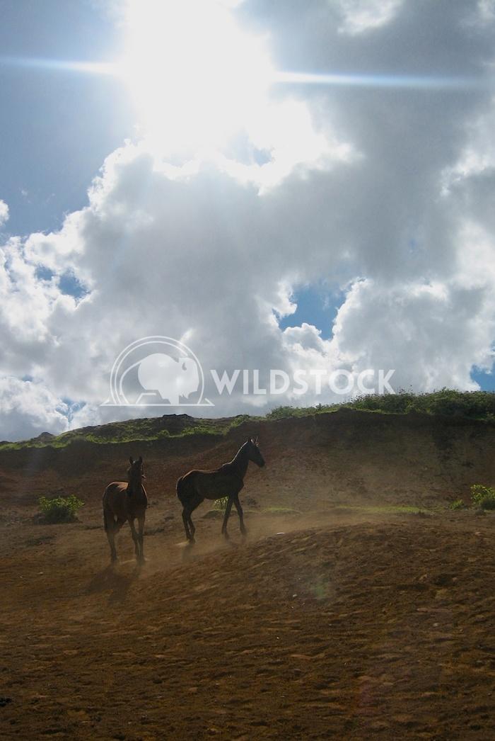 Wild Horses I - Ranu Raraku Quary, Easter Island Devon Chivvis