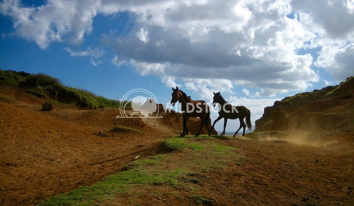 Wild Horses II - Ranu Raraku Quary, Easter Island Devon Chivvis