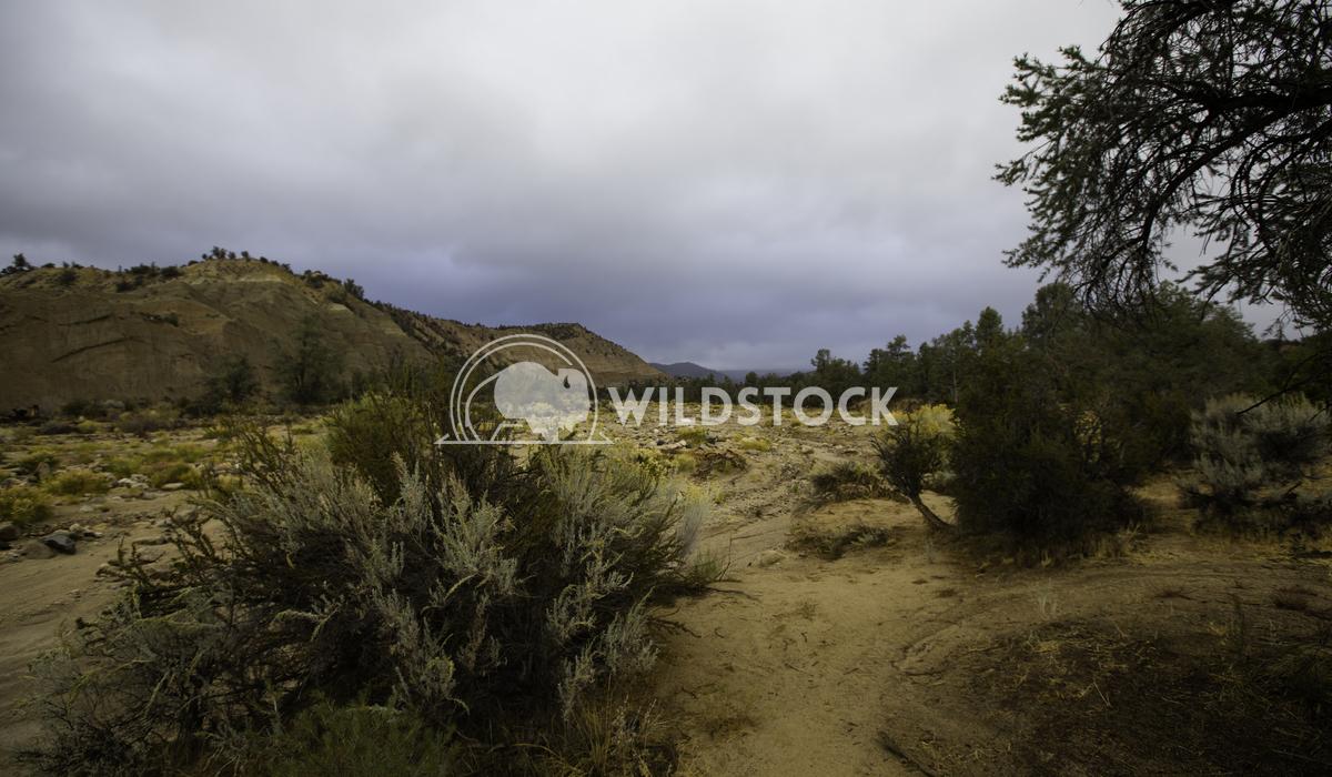 Desert Welcoming Henry McCluster