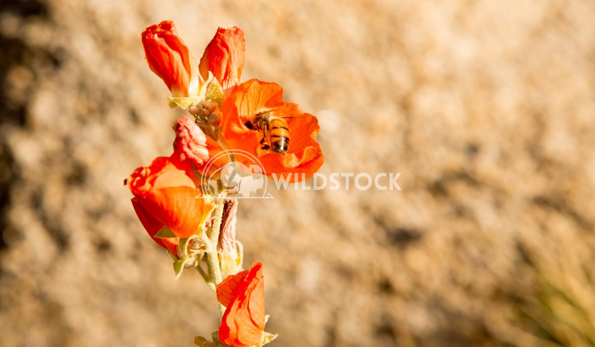 Red Petals Henry McCluster