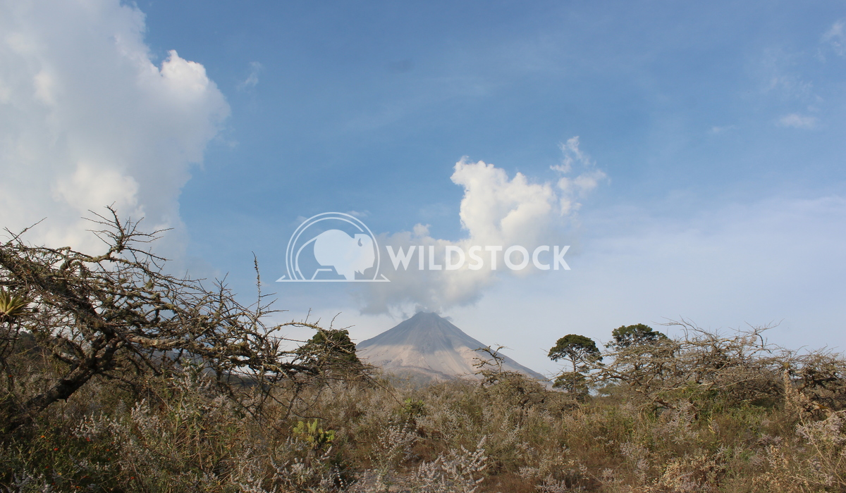 Beauty Background Edwin Cruz Colima volcano, in a beautiful cloudy day
