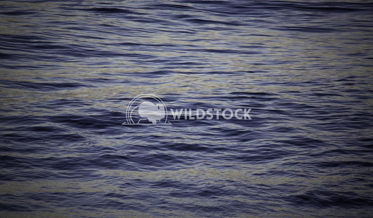 Big Sur Blue Hues Henry McCluster