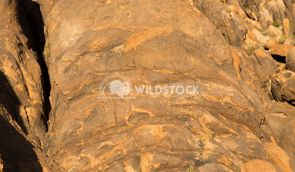 Rock Pillows Henry McCluster