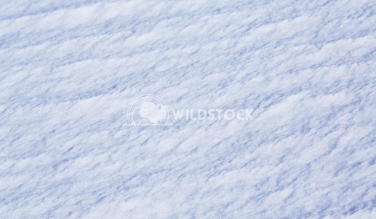 Sierra Snow Backdrop Henry McCluster