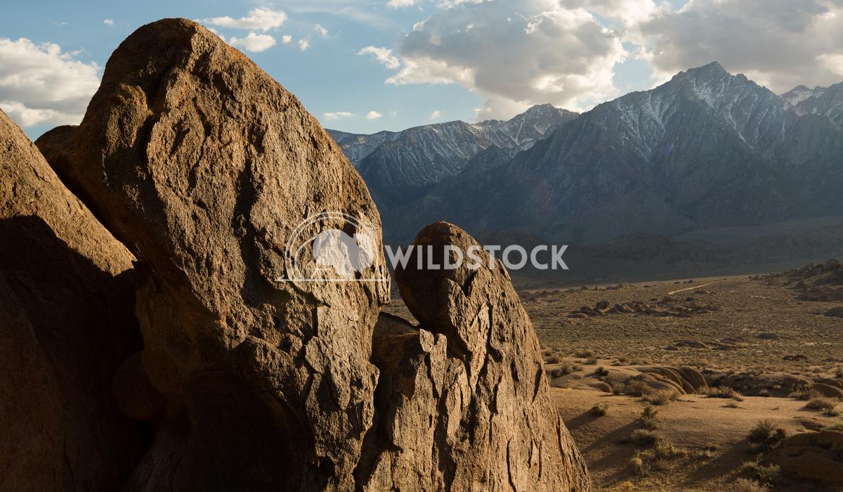 Basking in Sierra Sun Henry McCluster