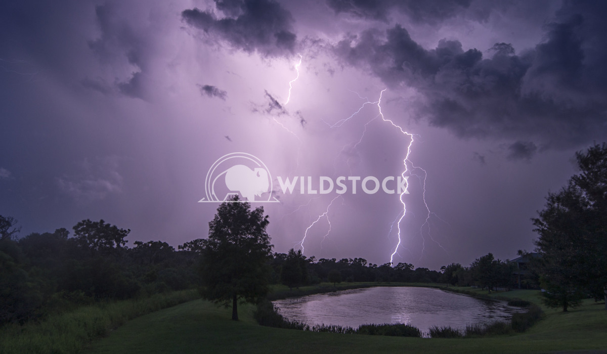 Lightning Strike Stacy White