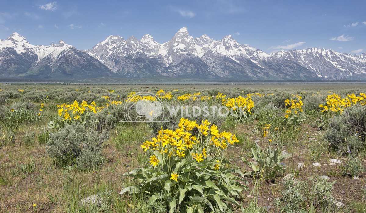 Spring in the Tetons Stacy White