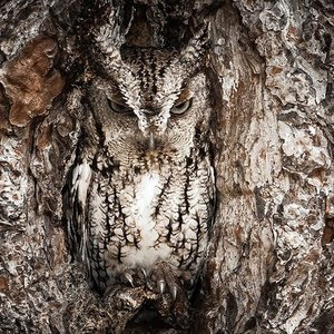 Owl camouflage disguise 30